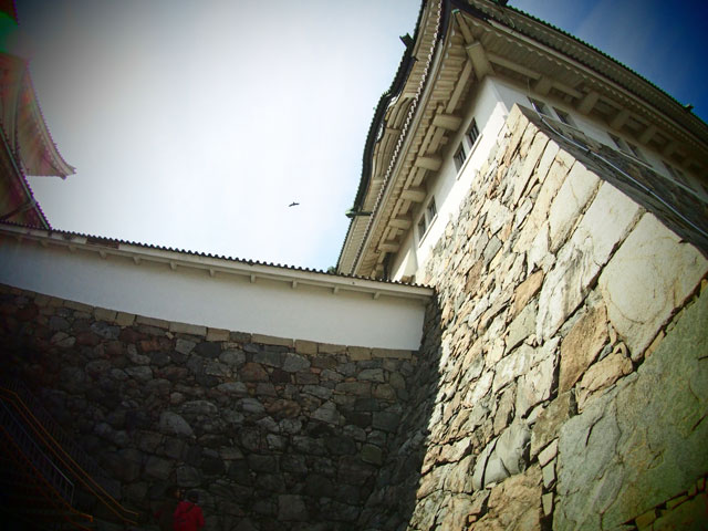鳥と名古屋城