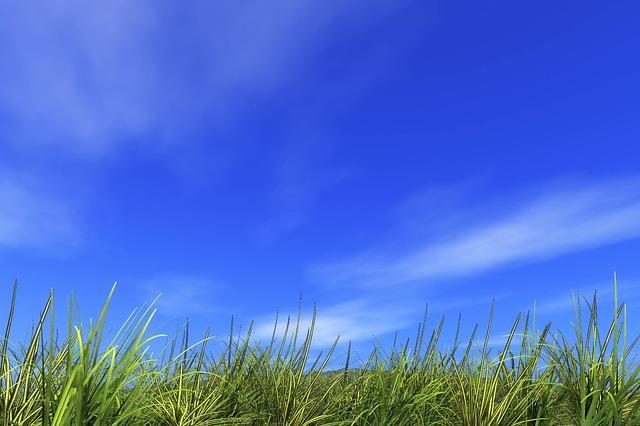 爽やかな草原