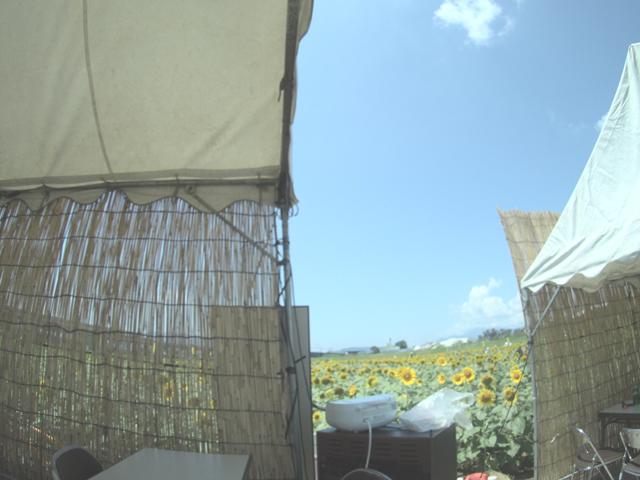 ひまわり畑の休憩所
