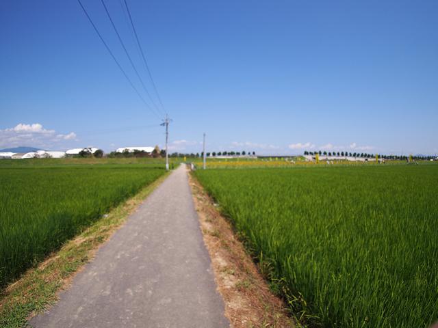 田舎の小道