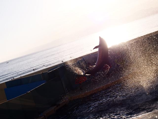 イルカと夕日