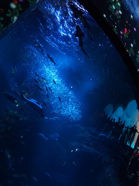 光と魚のショー