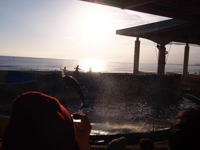 夕日とイルカショー