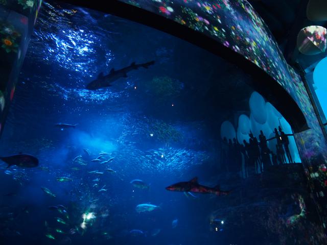 光と魚のショー2