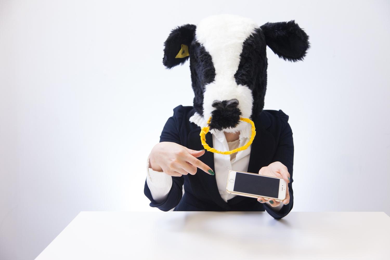 スマホを触る牛