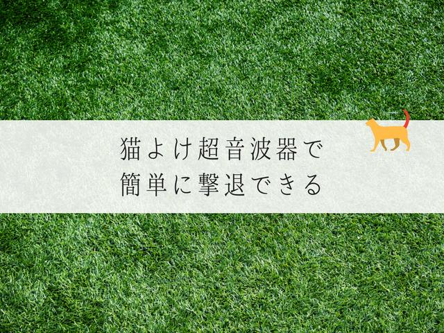 猫のこない青々とした芝生