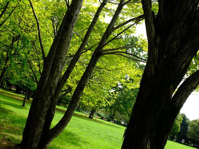 X100Fで撮影した公園の木